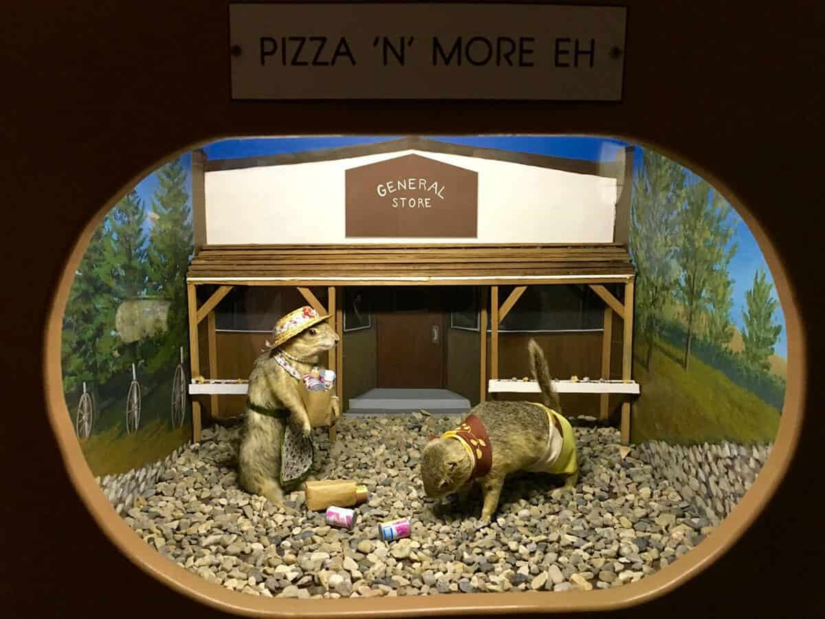 Diorama of two stuffed prairie dogs at the Gopher Hole Museum. The left prairie dog is dressed up in a hat and an apron carrying a brown paper bag filled with groceries. The prairie dog on the right is dressed in yellow shorts with a red and yellow scarf and is on the ground picking up the bag of groceries he dropped. Both prairie dogs are standing outside of a tiny general store with trees and hills painted on the wall behind them.