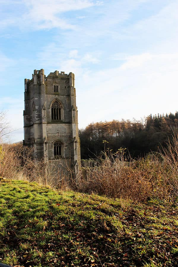 Autumn grass, with dead bushes and a tower from Fountain Abbey ruins peaking over the hill.