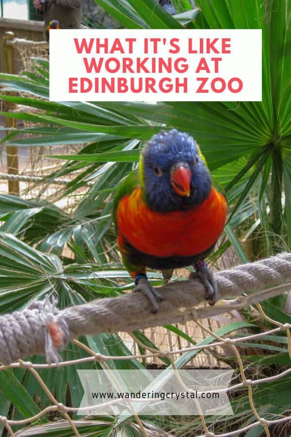 What its like working at Edinburgh Zoo