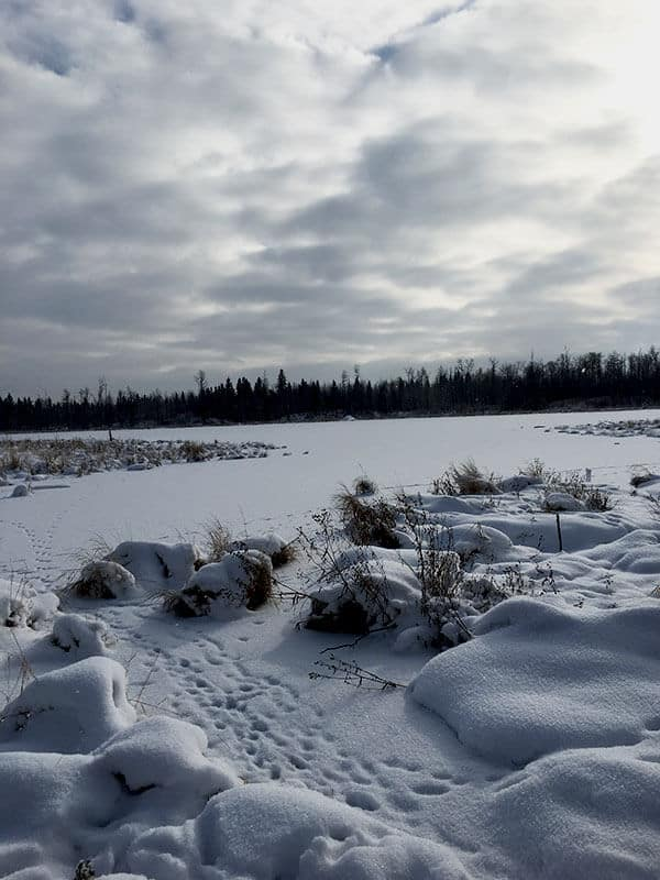 Snow covered rocks and lake with tree lined background at Elk Island National Park