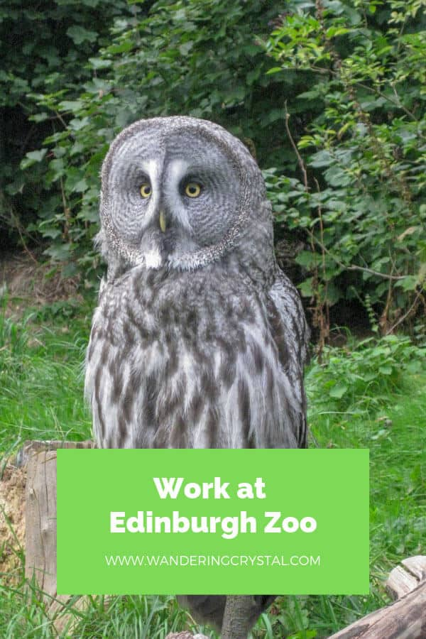Work at Edinburgh Zoo - Find out what it's like!