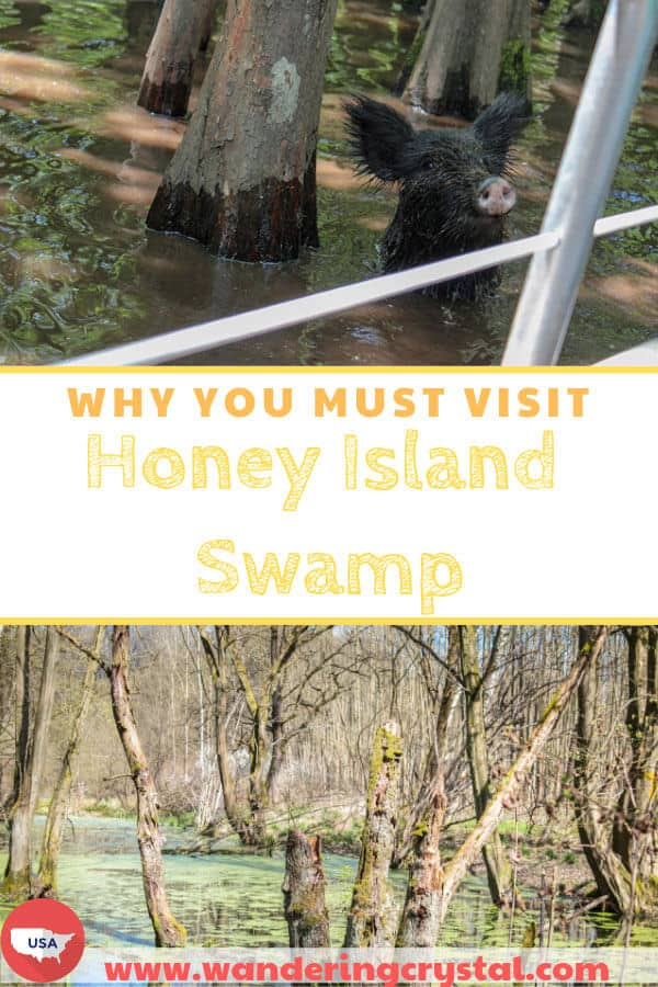 Why you must visit the Honey Island Swamp in Louisiana USA