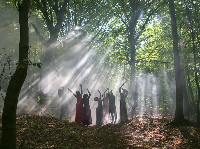Witches in the Forest
