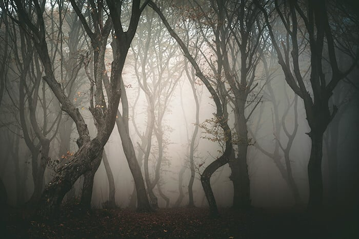 Hoia Forest - Darkness surrounds twisted trees in a forest. Spooky and haunted Romania location.