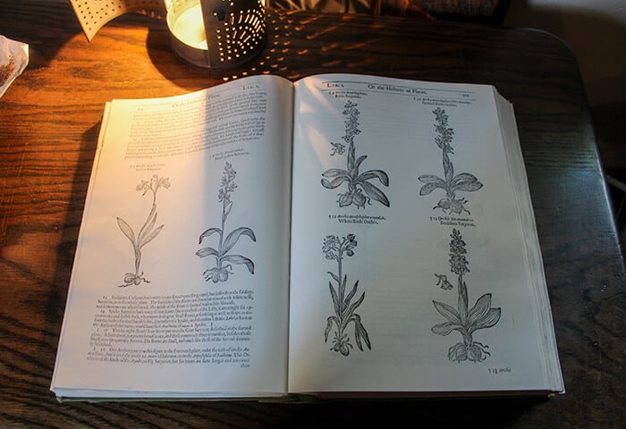 An open book inside the Salem Witch House with pictures of flowers and how they are used in healing