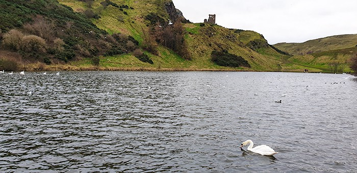 Holyrood Park, St. Margaret's Loch with a swan floating on the water, Arthur's Seat and the green Holyrood Park surrounds the loch.