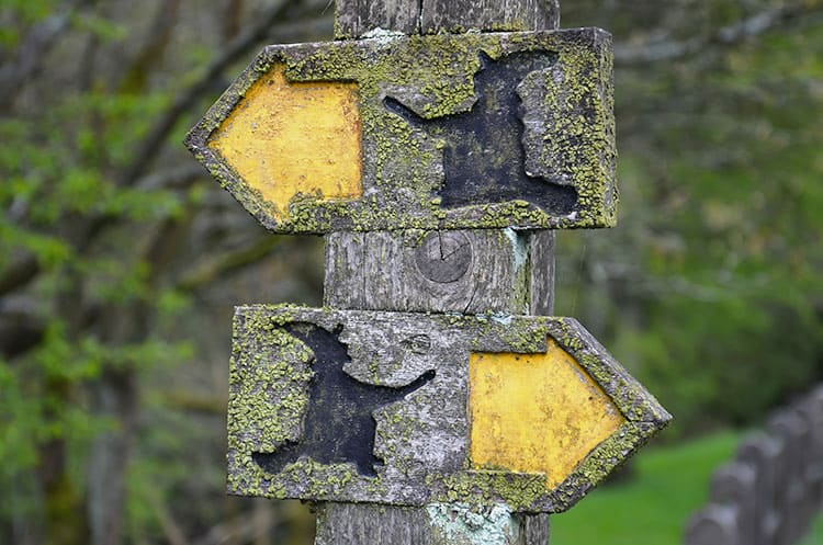 Two wooden signs pointing left and right, moss covered with a yellow arrow and witch on a broom carved into each sign.